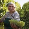La Comunità Europea bacchetta la Moldavia: basta falso Prosecco!